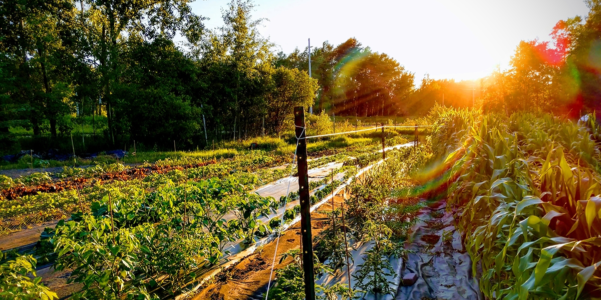 Farm fresh produce naturally and responsibly grown on Lone Rock Farms.